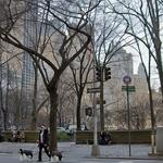 No Central Park