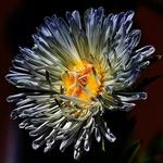 The Flower Dream