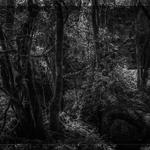 Mistérios da floresta II