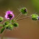 Pequenas flores_003