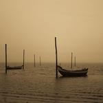 Neblinas da Ria