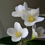 Pequenas Flores_001