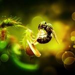 kumbang tasangkuik