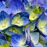 Azul da natureza