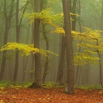 Silent forest in autumn colors