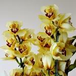 Beleza amarela