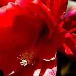 Flores do meu jardim - cacto