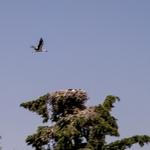 O voo da cegonha