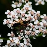 Insecto e a flor