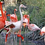 Flamingo______Ave Pernalta!