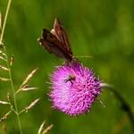 A borboleta e o gorgulho