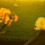 Lanterns of spring