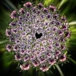 O coração da flor