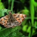 Mais uma mariposa