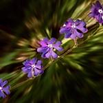 Pequenas flores silvestres