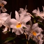 76ª Festa das Flores