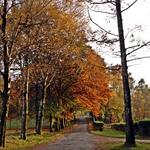 O outono pintou a Natureza!