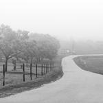 Neblinas a P&B