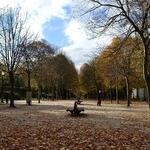 Avenida das Tílias (Palácio de Cristal)