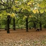 Caminhos de outono
