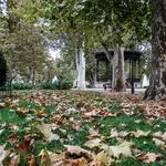 Outono chega...........As folhas caem !!!!!!!
