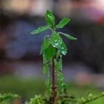 Pequenas plantas