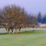A Árvore e a geada