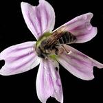 Procurando o néctar