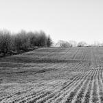 Campos lavrados