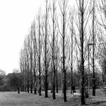 As árvores