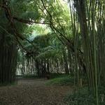 Traços de bambu