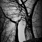 Forest instinct