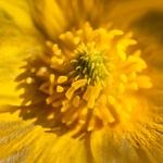 Interiores de uma flor campestre