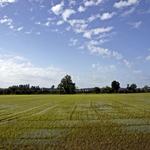 E os campos tornam-se verdes!