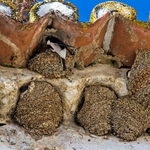 Andorinhas em Serpa
