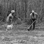 trabalho na terra