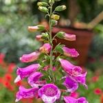 Flor de jardim _ 2