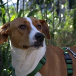 Nem um sem-abrigo abandona o seu cão
