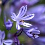 Flores de cor lilás