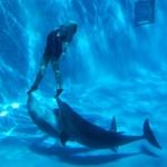 Brincando com golfinhos