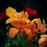 Salpicos de cores e beleza