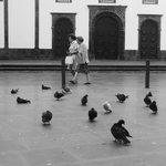 Azores, the women and the pigeons .