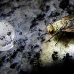 A mosca e a Caveira.......