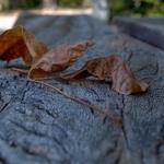 Primeiras folhas