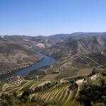 Douro vinhateiro - Quinta de Roriz