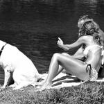 Labrador no rio