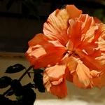 Uma Simples Flor.