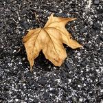 olhares de outono