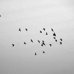 Nas asas da liberdade___