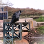 The Crow bath
